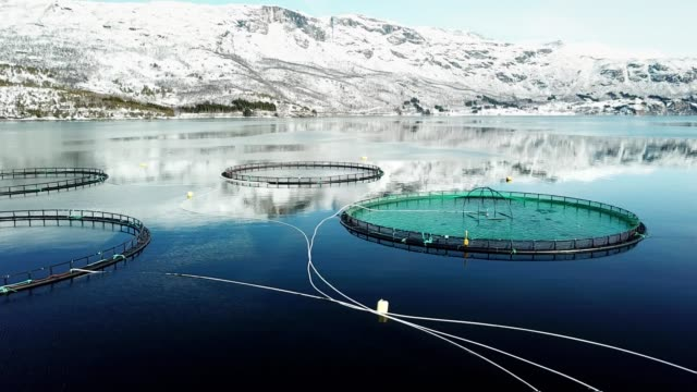 salmon fishing farm in norway - fish stock videos & royalty-free footage
