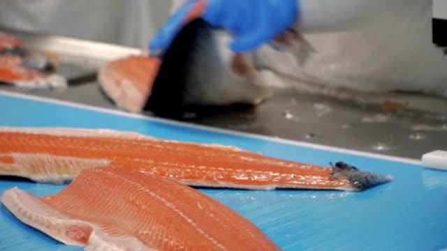 サケ産業 - コンベヤーベルト点の映像素材/bロール