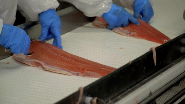 vídeos y material grabado en eventos de stock de industria del salmón - pescado y mariscos