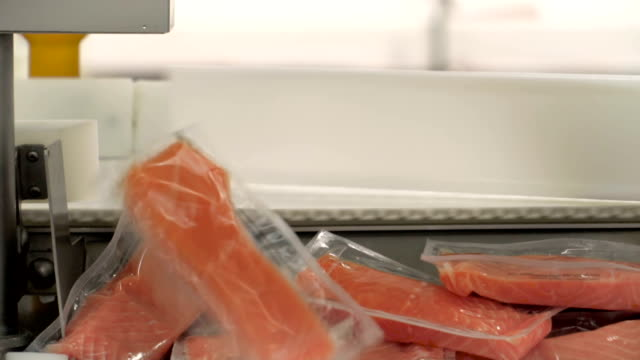 salmon industry - salmon stock videos & royalty-free footage