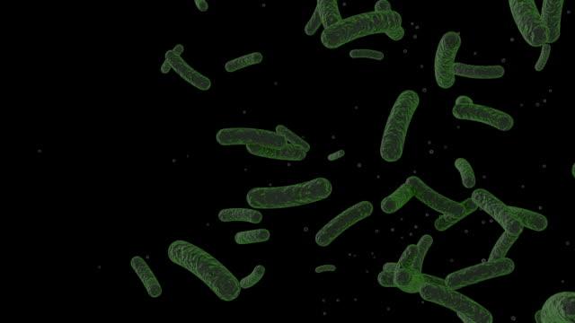 salmonella バクテリア - 胃腸炎点の映像素材/bロール