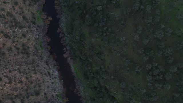 salor river, herreuela, mediterranean forest, sierra de san pedro, cáceres, extremadura, spain, europe - oak tree stock videos and b-roll footage