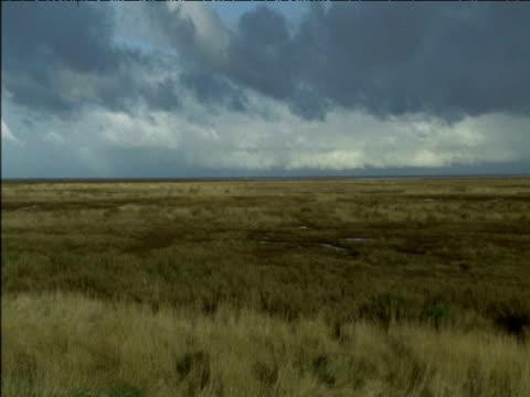 Salt marsh with sea beyond