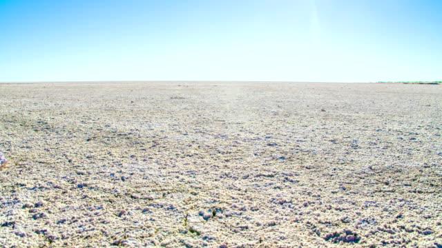 ws ds 塩パンでエトーシャ - 乾燥気候点の映像素材/bロール