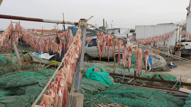 salted fish are being dried in the sun on november 28 in qingdao, shandong province of china. - fishing industry stock videos & royalty-free footage