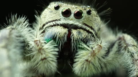 salticidae jumping spider - animal body part stock videos & royalty-free footage