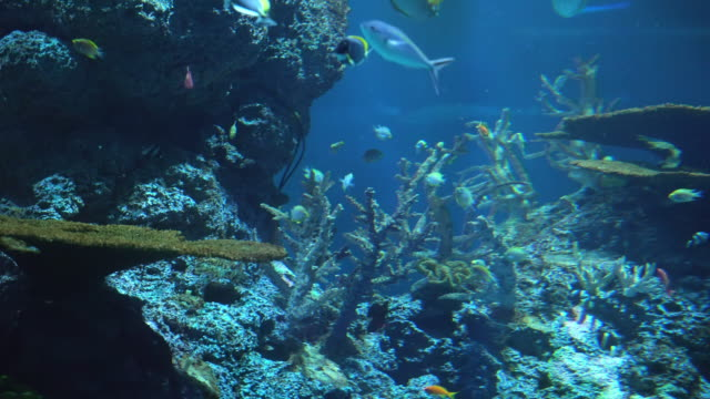 saltwater fish and coral reef at the bottom of tropical sea - fondale marino video stock e b–roll