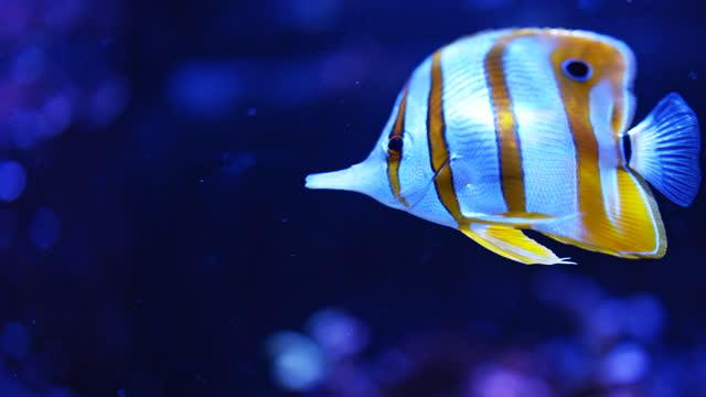 saltwater fish aquarium - reef stock videos & royalty-free footage