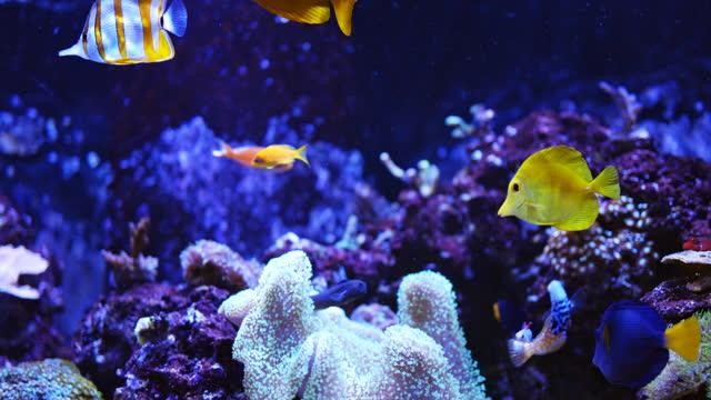 vídeos de stock e filmes b-roll de saltwater fish aquarium - coral cnidário