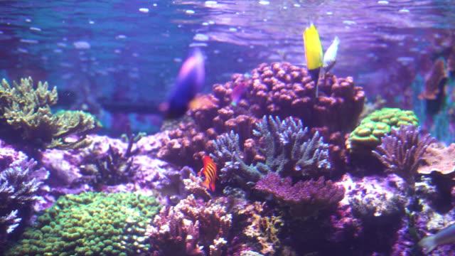saltwater fish on sallow level sea under neon light - aquarium stock videos & royalty-free footage
