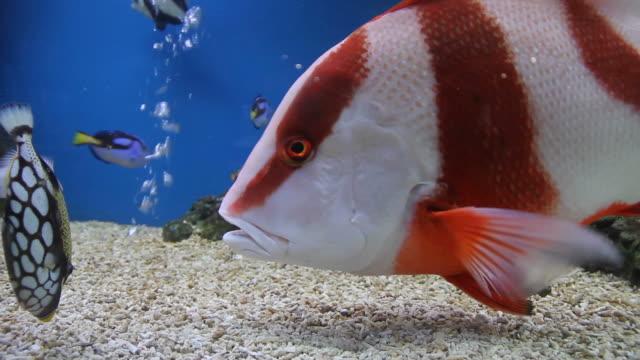 vídeos de stock e filmes b-roll de peixe de água salgada - aquário edifício para cativeiro animal