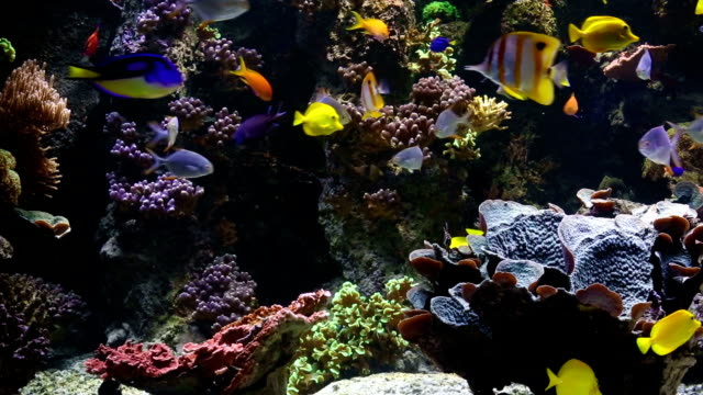 saltwater fishes - aquarium stock videos & royalty-free footage