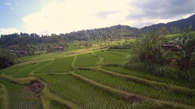 Sambangan Paddy Fields Bali