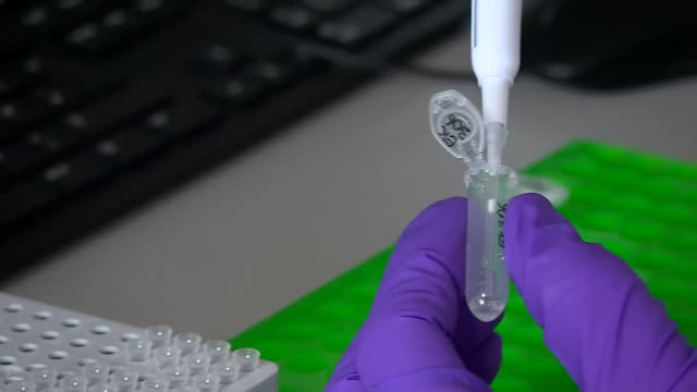 sample from a tree being tested in a laboratory for ash dieback - tree trunk stock videos & royalty-free footage
