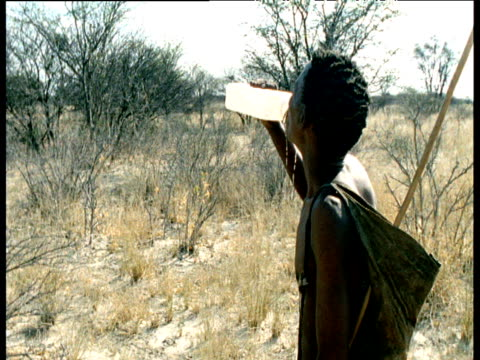 San bushman drinks and pours water over himself as he undertakes long hunt through Kalahari desert, Southern Africa