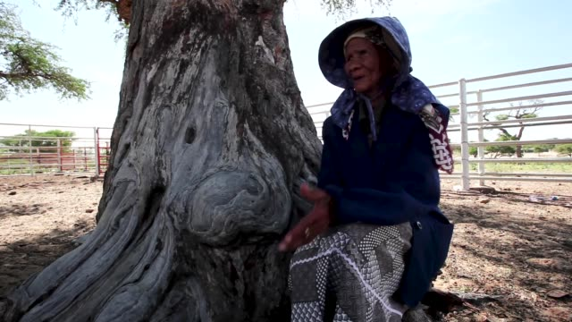 San Bushwoman Una 82 from the Khomani San community in the Southern Kalahari desert on October 15 2009 in the Kalahari South Africa Una is one of the...