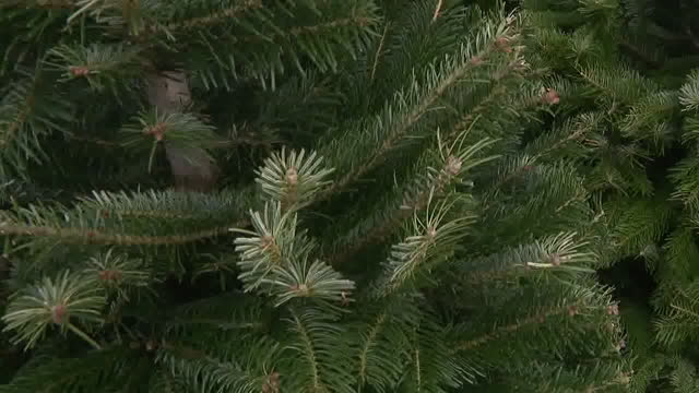 san diego, ca, u.s. - christmas tree lot in san diego. on sunday, november 22, 2020. - christmas tree stock videos & royalty-free footage