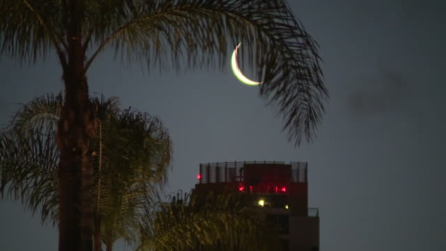 kswb san diego ca us crescent moon on night sky with palm tree in foreground time lapse on tuesday may 19 2020 - tranquil scene stock videos & royalty-free footage