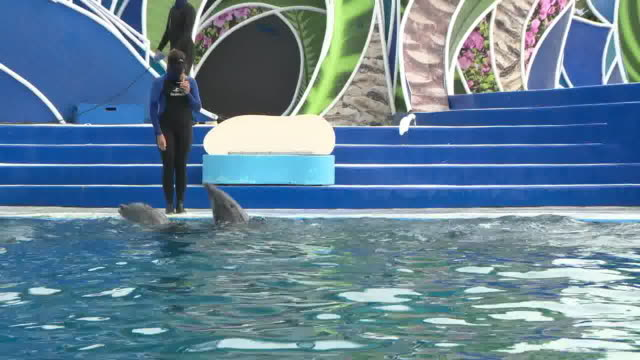san diego, ca, u.s. - dolphins show at san diego sea world reopened amid coronavirus pandemic on monday, august 24, 2020. - dolphin stock videos & royalty-free footage