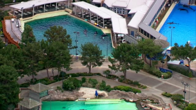 san diego, ca, u.s. - drone view of killer whales in pool at seaworld san diego, on wednesday, april 1, 2020. - killer whale stock videos & royalty-free footage