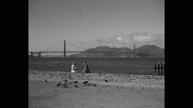 san francisco bay, couple sitting on stone wall feeding pigeons, golden gate bridge in distance - golden gate bridge stock videos & royalty-free footage