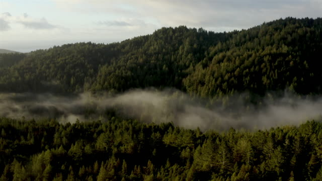 san francisco bay: redwood forest early in the morning: aerial - coast redwood stock videos & royalty-free footage