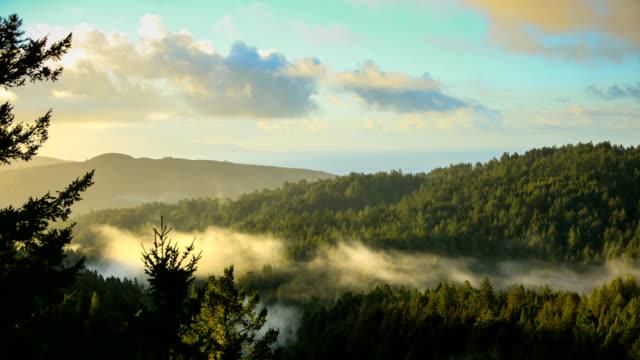 stockvideo's en b-roll-footage met baai van san francisco: redwood forest vroeg in de ochtend - heuvellandschap