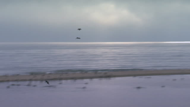 vídeos de stock, filmes e b-roll de san francisco, californiabird lands in flock on beach - oeste dos estados unidos