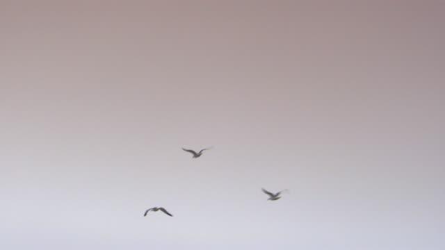 vidéos et rushes de san francisco, californiabirds flying through the air - petit groupe d'animaux