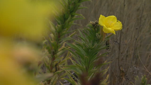 san francisco, californiayellow flower - small group of objects stock videos & royalty-free footage