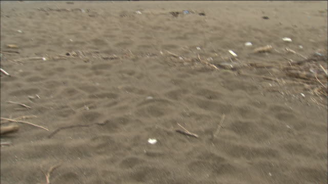 Sand and debris line a Japanese beach where the turtle Chelonia mydas lays its eggs.