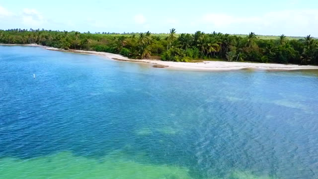 sand and palm trees on saona island in the dominican republic - hispaniola stock videos & royalty-free footage