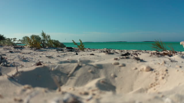 sand and plants with turquoise water in background - surface level stock videos & royalty-free footage