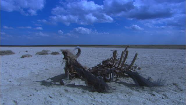 WS sand area with wildebeest skeleton