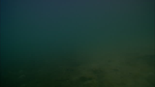sand billows from a seabed. - dark stock videos & royalty-free footage