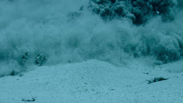 sand billows over seabed - mondo marino video stock e b–roll