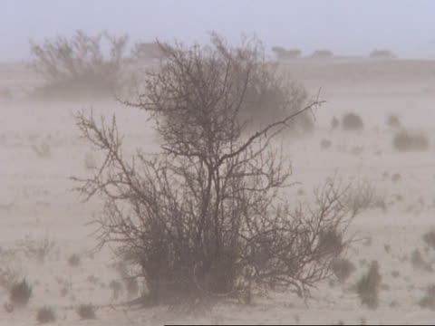 Sand blowing through desert & bushes, Oman