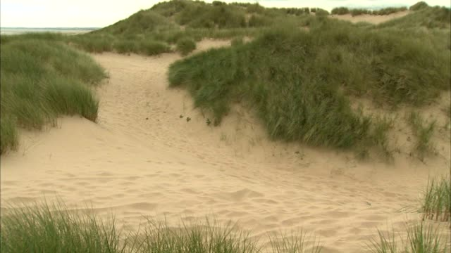 sand dune covered w/ marram grass pan dunes stable grass beyond no people sites of special scientific interest protected scottish environment... - marram grass stock videos & royalty-free footage