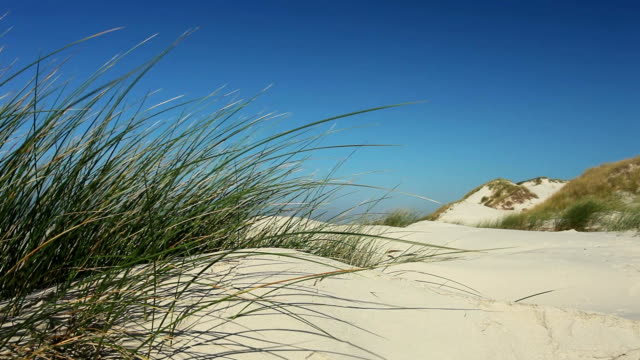 Sanddüne in the wind