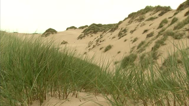 sand dune marram grass tu ws taller dunes w/ patches of grass top sides no people sites of special scientific interest protected scottish environment... - marram grass stock videos & royalty-free footage