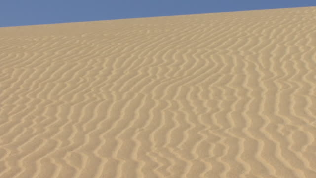 ms, tu, sand dune under clear sky / fuerteventura, canary islands, spain - atlantikinseln stock-videos und b-roll-filmmaterial