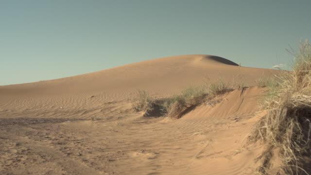 vídeos y material grabado en eventos de stock de sand dune w grass - wiese