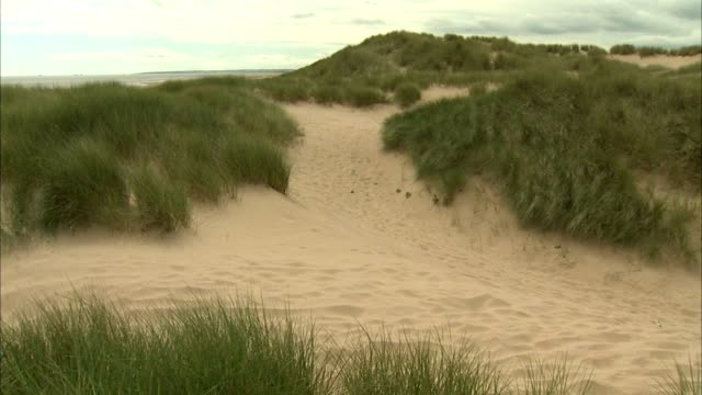 sand dunes covered w/ marram grass stable grass area beyond dunes no people sites of special scientific interest protected scottish environment... - marram grass stock videos & royalty-free footage