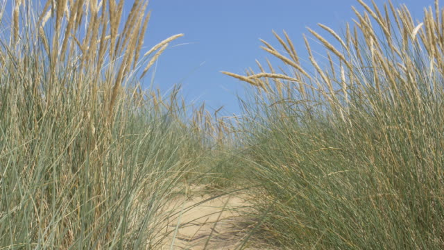 sand dunes, marram grass, deep blue sky and sea. copy space. lockdown. - sea grass plant stock videos & royalty-free footage