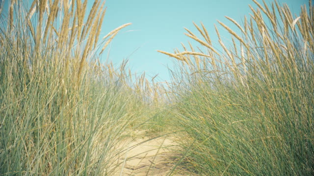 sand dunes, marram grass, pale blue sky and sea. copy space. lockdown. - sea grass plant stock videos & royalty-free footage