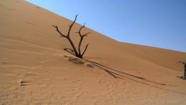 vídeos de stock, filmes e b-roll de sand dunes of namib desert at sunrise - clima árido