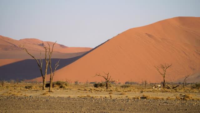 Sand dunes of Namib desert at sunrise