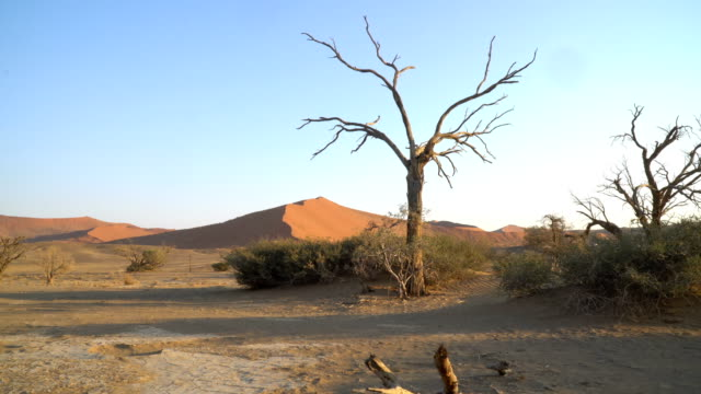 vídeos y material grabado en eventos de stock de sand dunes of namib desert at sunrise - árbol latente