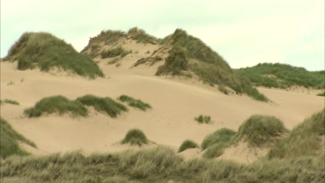 ws sand dunes topped or covered w/ marram grass pan dunes more grass sand no people sites of special scientific interest protected scottish... - marram grass stock videos & royalty-free footage