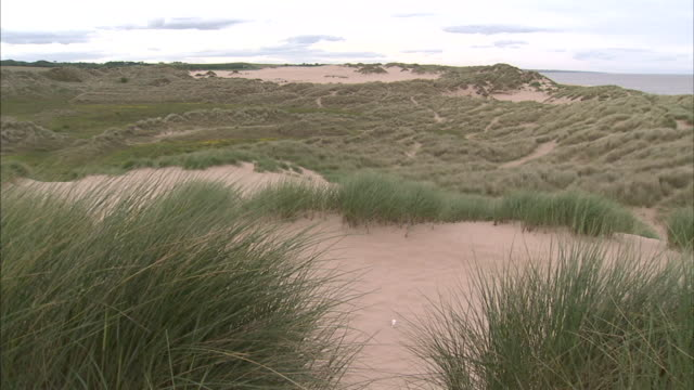 hd ws sand dunes w/ marram grass moving in wind fg pan dunes w/ north sea bg no people sites of special scientific interest protected scottish... - marram grass stock videos & royalty-free footage